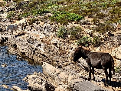 Asinara Island Full Day Small Group Excursion