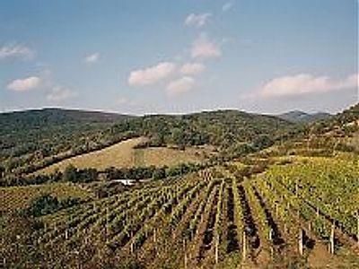 Little Carpathians Wine Route Private Tour