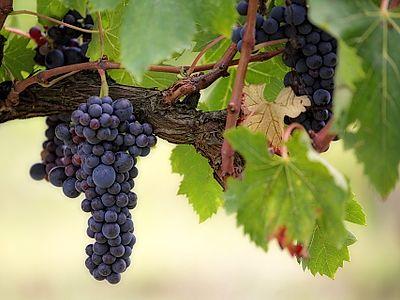 Enjoy Local Wines
