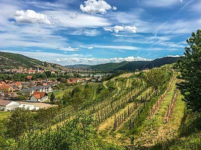 Wachau Valley Southern Vineyards Private Hike
