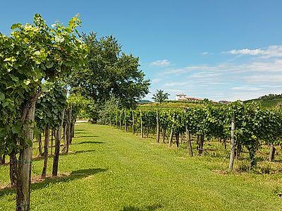 Brda - The Tuscany of Slovenia Private Tour