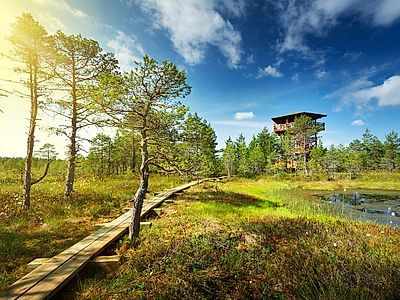 Tallinn by Private Transfer with Stops at Rakvere Castle and Viru Bog