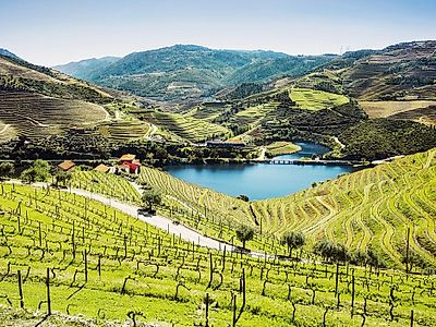 Douro Vallley by Private Transfer