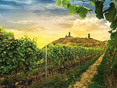 Bohemian Vineyards and Wine Tasting Group Tour