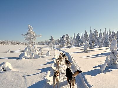 Become a Husky Musher Group Tour