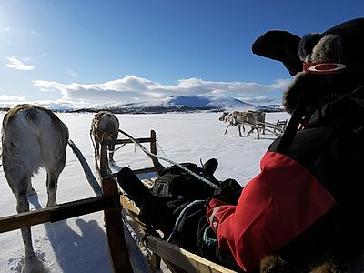 Reindeer Farm Visit and Short Safari Group Tour