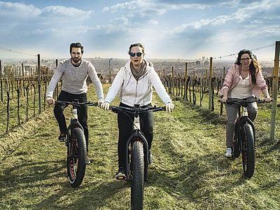 Vienna Vineyards Fat E-Bike Small Group Tour