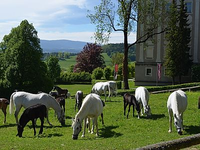 Upgrade to Graz by Private Transfer with a Stop at a Lippizaner Stud Farm