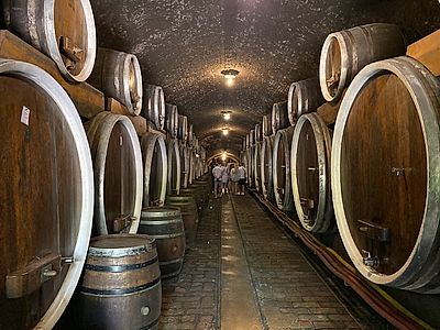 Belgrade by Private Transfer with Wine Tasting at Ilocki Podrumi