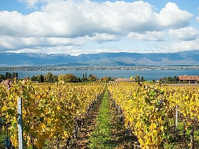 Upgrade to Geneva by Private Transfer with Stops in Montreux & Lavaux